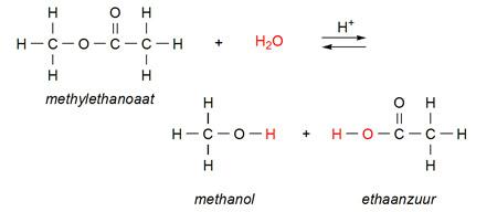Wat Is Een Hydrolysereactie